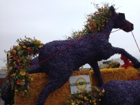 Noordwijk - Bloemen Corsa - horse